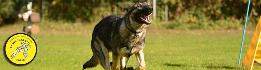 DHAV – De Hond Als Vriend
